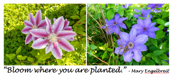 Bloom Where Planted - quote
