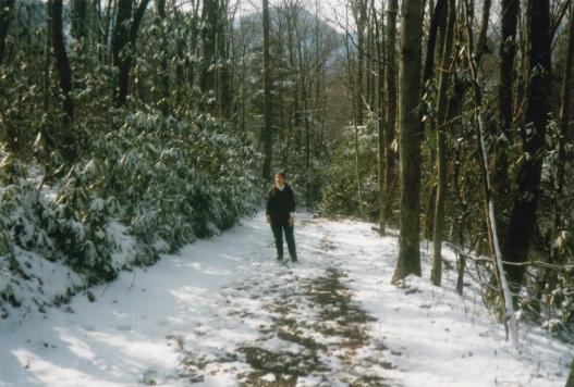 Snowfall Scene